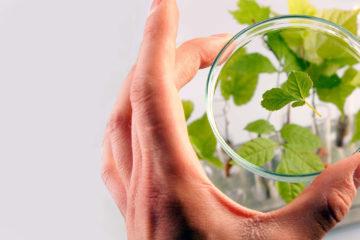 Serviços dos Laboratórios Nova Flora